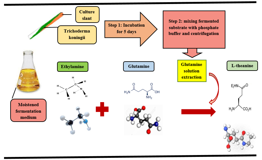 Enzymatic Synthesis of Theanine in the Presence of L